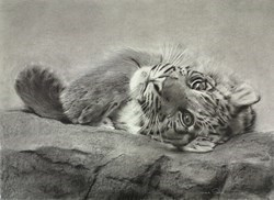 Paws For Thought II by Sarah Stokes -  sized 30x22 inches. Available from Whitewall Galleries